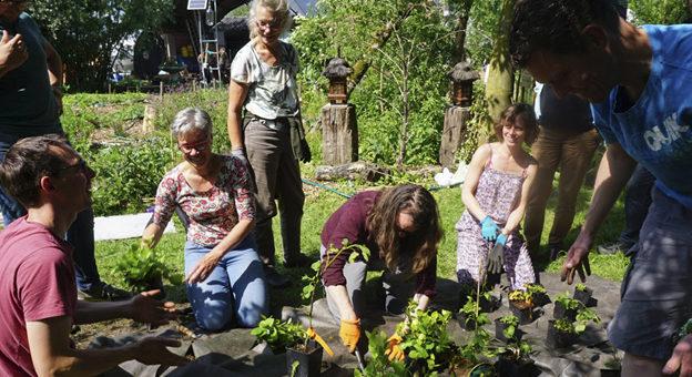 Eetbare Woonwijk Rijnvliet – een interview